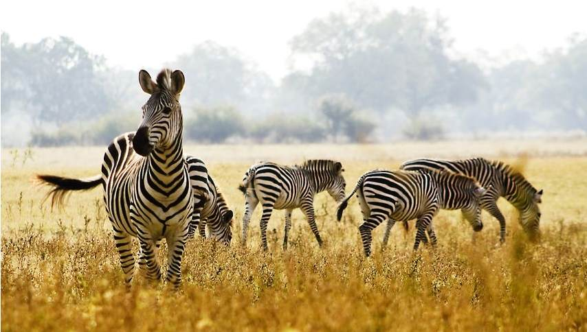 Ofertas de viajes a tanzania safari