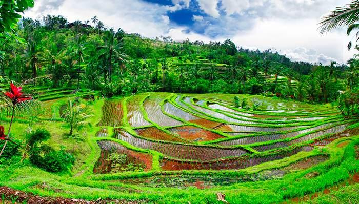 Ofertas de viajes a indonesia
