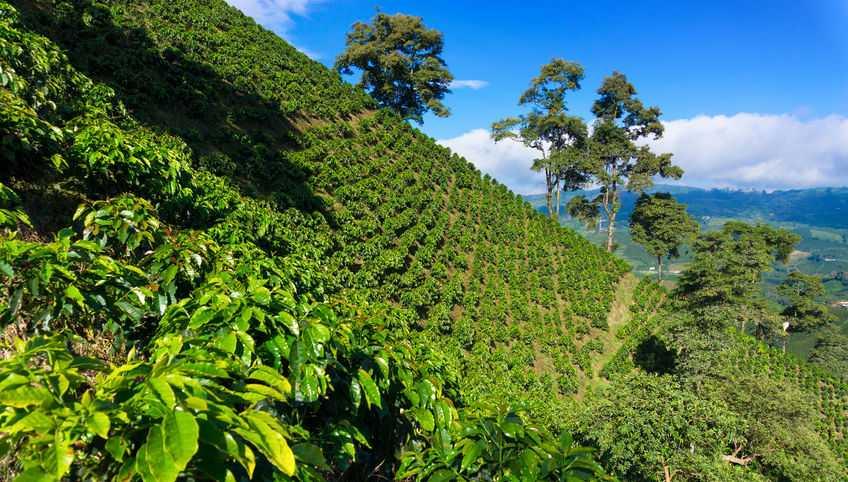 Ofertas de viajes a colombia